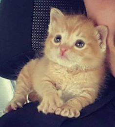 Turns out it was this tiny kitten. | This Cop Rescued A Kitten Left In The Rain And Now They're A Crime-Fighting Duo