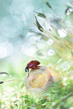 Wonderland, S.D.G Photographie