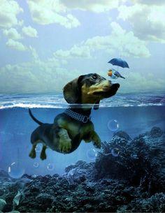Photoshop teckel with a bird. Dogs And Puppies, Cute Puppies, Dog School, Dachshund Love, Daschund, Weenie Dogs, Dog Rules, Dog Art, Dog Friends