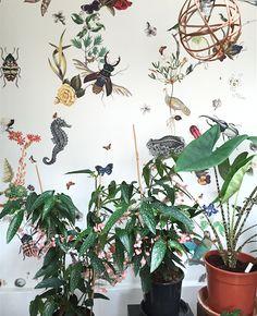 Atelier végétal de Mama Petula Les Grands voisins Paris par Nat et nature