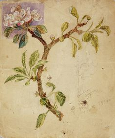 "Apple Blossom - Study for Rossetti's ""Vision of Fiammetta"""
