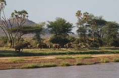 """Day 2 of my """"12 Days of Drawings"""" sale. Our first stop on Simon Combes' safari was the Samburu area of northern Kenya. We camped on this river and watched elephants crossing right in front of us."""
