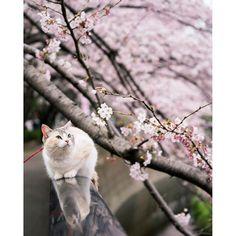 さくらいろ Sakura-iro