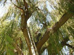 Tree Colony #3