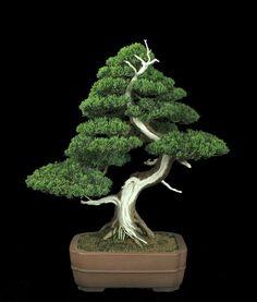 Bahawalpur Digest: Bonsai Art - Bonsai Tray Cultivation, Ancient Art Of Growing Trees, Worlds Most Famous Bonsai Trees