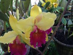 Minha orquídea!!!