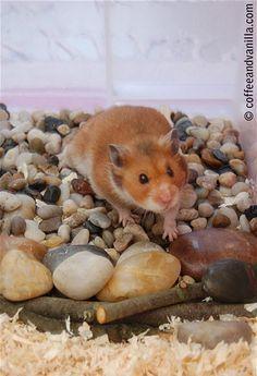 DIY Hamster Rock Garden - petdiys.com