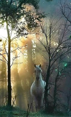 Totally reminds me of my dream of the freed white horse that turned and looked at me