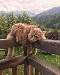 I Love Cats, Crazy Cats, Cute Cats, Adorable Kittens, Cute Baby Animals, Animals And Pets, Funny Animals, Nature Animals, Pretty Cats
