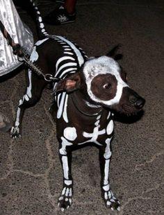 diy dog costumes for halloween | INSPIRATION: Creepy Halloween Horror Costumes For Dogs