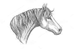 Racehorse head sketch. $6.00