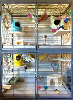 Brilliant idea for a chinchilla cage. # Brilliant # chinchilla cage # an # idea . Brilliant idea f Chinchillas, Hamsters, Pet Rodents, Cage Chinchilla, Chinchilla Care, Ferret Cage, Pet Rat Cages, Pet Cage, Teacup Pigs