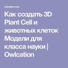 Как создать 3D Plant Cell и животных клеток Модели для класса науки   Owlcation