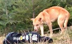 Lying on the Frozen Ground, Rescuer Saves Starving Mountain Dog