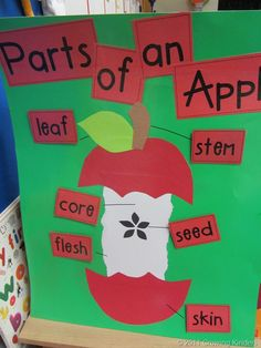 Parts of an Apple Illustration -- use to link science and literacy with an apple poem for poetry folder