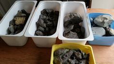 Sorting fossils at Everything Dinosaur.