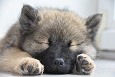 Husky, Dogs, Animals, Image, Animaux, Doggies, Animal, Animales, Husky Dog