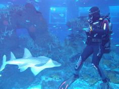 Diving enthusiasts can now go for their Open Ocean Dive in the S.E.A. Aquarium at Resorts World Sentosa!
