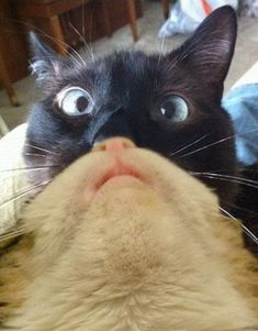 Funny pictures about A Cat's Cat Beard. Oh, and cool pics about A Cat's Cat Beard. Also, A Cat's Cat Beard photos. Cute Funny Animals, Funny Cute, Cute Cats, Hilarious, Funny Cat Pictures, Animal Pictures, Funny Photos, Beard Pictures, Beard Images