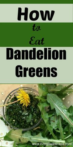 How to Eat Dandelion Greens (Video Dandelion greens do more than give you the bitter kick start for digestion; they are also full of vitamins and minerals. Dandelion greens contain magnesium potassium; iron, vitamins A, B and C. Dandelion greens are super Healing Herbs, Medicinal Herbs, Natural Medicine, Herbal Medicine, Herbal Remedies, Natural Remedies, Dandelion Recipes, Wild Edibles, Edible Plants