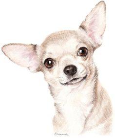 Watercolour Artists Gallery - Caroline Elizabeth Maxwell Animal Sketches, Animal Drawings, Lion King Drawings, Chihuahua Art, Mini Canvas Art, Gif Animé, Watercolor Animals, Dog Portraits, Animal Paintings
