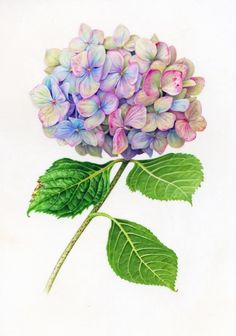 Image result for hydrangea tattoo