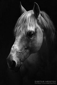 www.pegasebuzz.com | Equestrian photography : Dimitar Hristov.