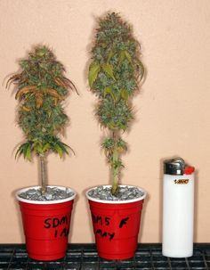 Cannabis micro grow by Stunted