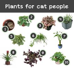 Plants for cat people - 10 budget friendly and easy to find plants that are also safe for cats.