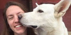 After an 11-Mile Journey, a Lost Dog Finds His Way Back to His Foster Mom