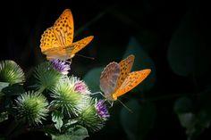 Frase (6) Amas la vida. Amas a los animales. Amas a la naturaleza. Eres alguien con conciencia.