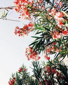 Certains clichés feraient de sublimes imprimés... Pinterest Inspiration, Decoration, Planting Flowers, Images, Bouquet, Bloom, Landscape, Plants, Instagram