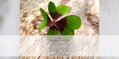 Costs & Fees, Weddings, Elopements, Honeymoons • http://www.weddingsnorthcarolina.us/information/costs-fees • Estimating wedding costs is a back and forth process until options have become decisions, and ideas have become a plan.