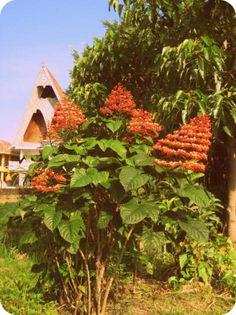 Batak house in Lake Toba, Indonesia