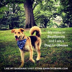 This is Beethoven. And this is the bandana he's rocking: http://OFA.BO/LU87hH