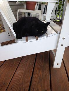 Ha ha looks like my cat is a lounger