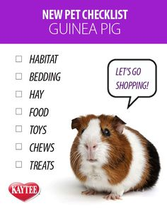New pet checklist: Guinea Pig. Learn what you will need on our blog when you become a pet parent to a guinea pig.