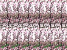magic eye picture- can you see what it is