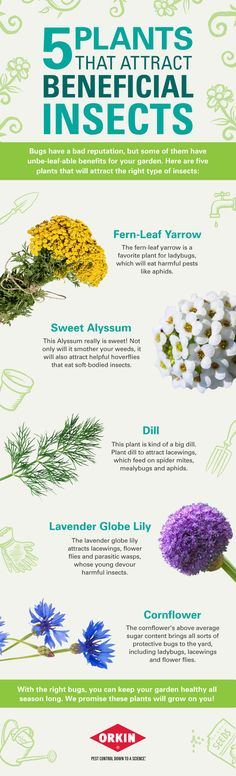 5 Plants That Attract Beneficial Insects Learnwithorkin My Garden Gardening For Beginners, Gardening Tips, Outdoor Plants, Outdoor Gardens, Homestead Gardens, Beneficial Insects, Garden Seeds, Growing Herbs, Companion Planting