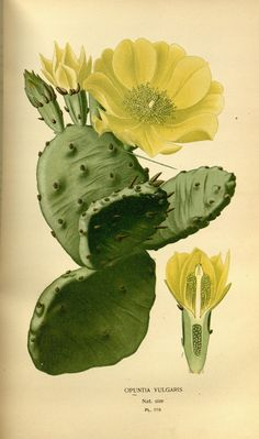 https://flic.kr/p/h7sAh6   n132_w1150   Favourite flowers of garden and greenhouse /. London and New York :Frederick Warne & co.,1896-97.. biodiversitylibrary.org/page/36443531