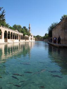 Abraham was born in Turkey. Obviously he knew what was up, and there's a huge mosque complex dedicated to him