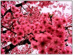 Resultados de la Búsqueda de imágenes de Google de http://www.designzzz.com/wp-content/uploads/2010/06/Pink_Flowers.jpg