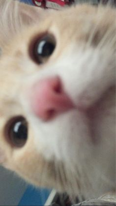 My cat was able to swipe open the camera while I was asleep ^ . Cute Baby Cats, Cute Baby Animals, Funny Animals, Like Animals, Animals And Pets, Cat Nose, Cat Boarding, Animal Memes, Cat Memes