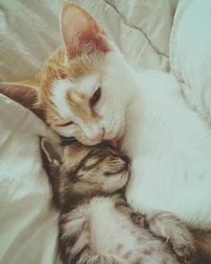 When a rescue cat and a tiny orphaned tabby found each other, they bonded and became family. Photo: @taylormyj A tiny orphaned tabby was very fragile and weak when she came to @taylormyj. The young lady nursed her back to health. After she introduced her ginger and white cat to the little kitte...