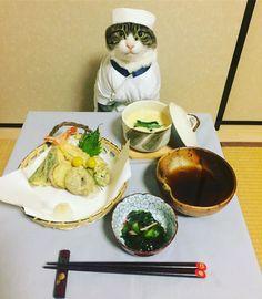 猫の手を借りて、お料理のレベルが一段アップ!