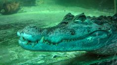 Detail view of a Alligator Head