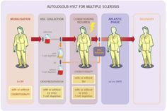 Multiple Sclerosis Research: HSCT for multiple sclerosis