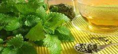 Τσουκνίδα: το φυτό που θεραπεύει τα πάντα!
