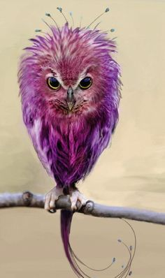 Don't call me an owl! I'm an Easter egg born in an owl body. Exotic Birds, Colorful Birds, Green Birds, Purple Bird, Exotic Animals, Purple Rain, Beautiful Owl, Animals Beautiful, Pretty Birds