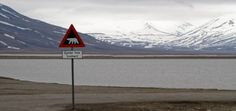 Svalbard - blog Bar a Voyages #Svalbard #spitzberg #norvege #ice #banquise #arctique #arctic #pancarte #ours #polaire #board #polarbear #norway